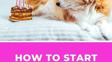 How to Start a Dog Treat Business from Home